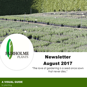 201708 Fairholme Plants newsletter: A visual guide to planting. Writer and designer Anna Mouton.