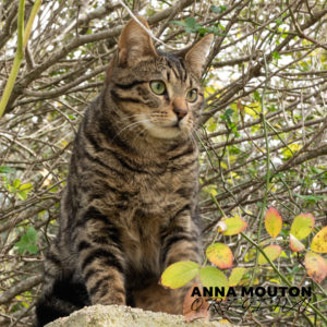 Tabby cat gazing down from a wall. Photo by Anna Mouton.