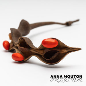 Seedpod of coral tree — Erythrina caffra. Photo by Anna Mouton.