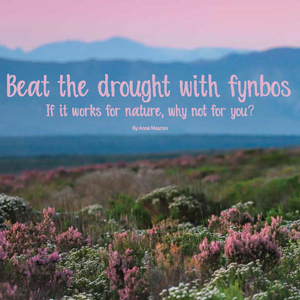 201810 MARKtoe article: Beat the drought with fynbos by Anna Mouton.
