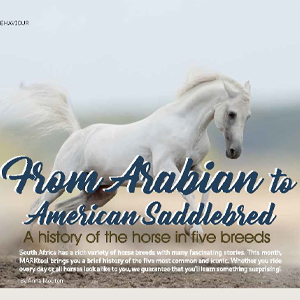 201811 MARKtoe article: From Arabian to American Saddlebred by Anna Mouton.