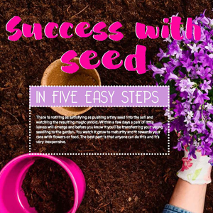 201811 MARKtoe article: Success with seeds in five easy steps by Anna Mouton.