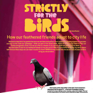 201902 MARKtoe article: Strictly for the birds by Anna Mouton.